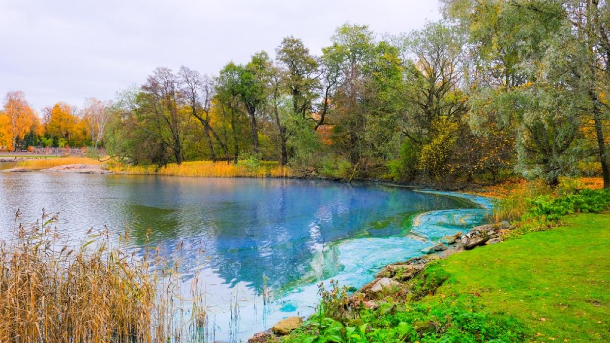 blue green pond algae, backyard dangers