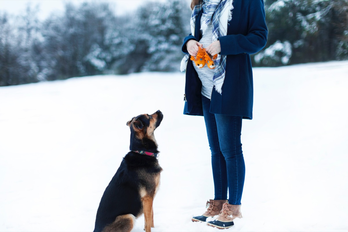 pregnant woman with dog things you never knew dogs could do