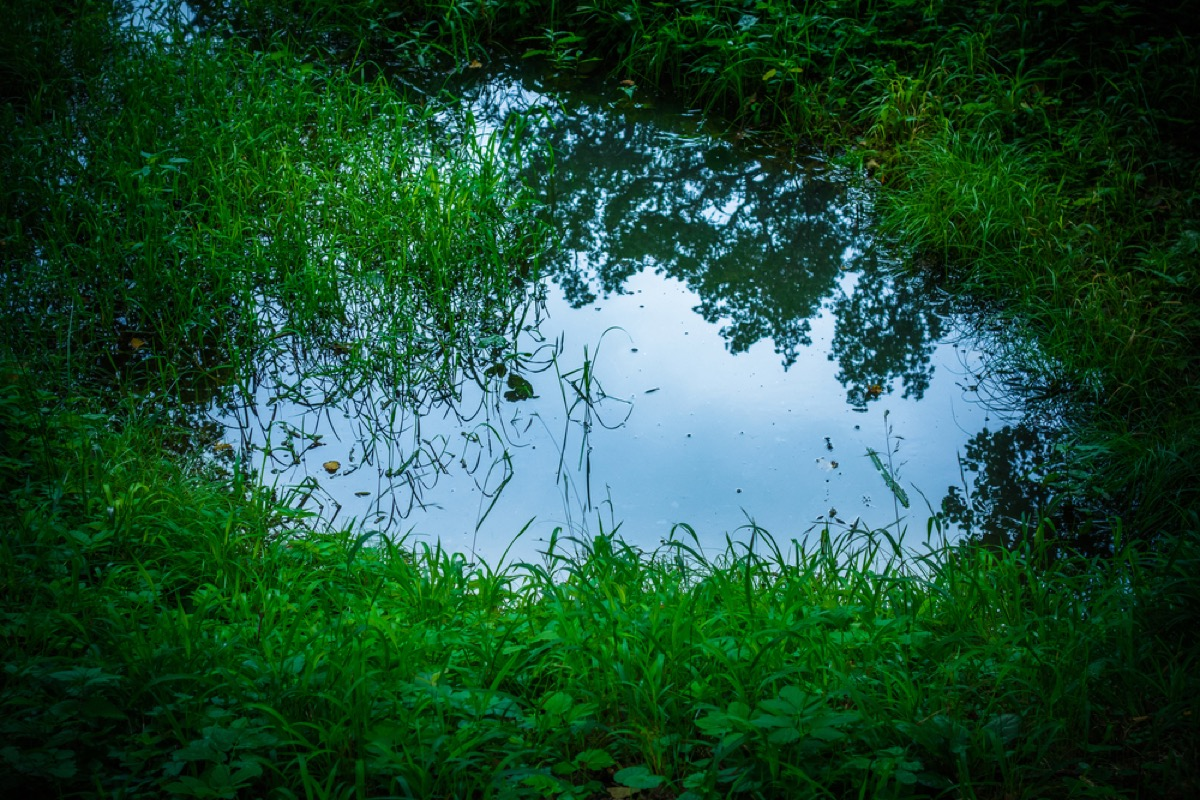 standing water in grass, backyard dangers
