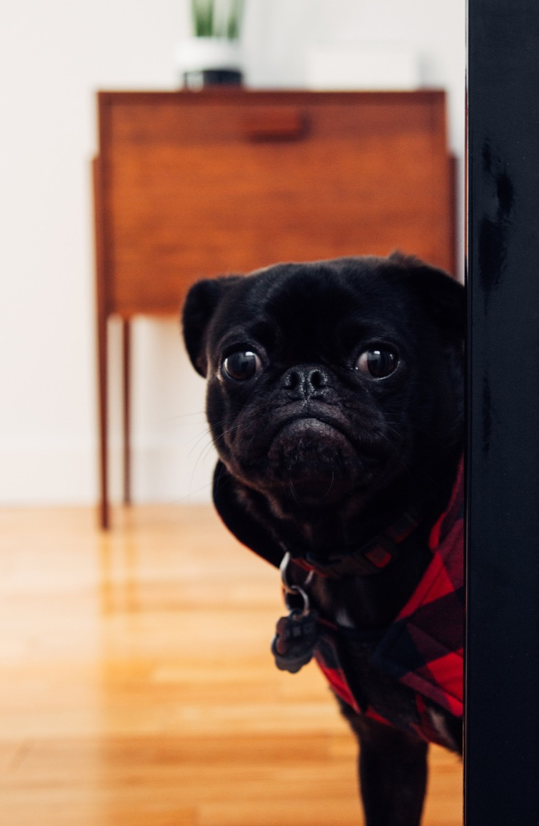 scared dog things you never knew dogs could do