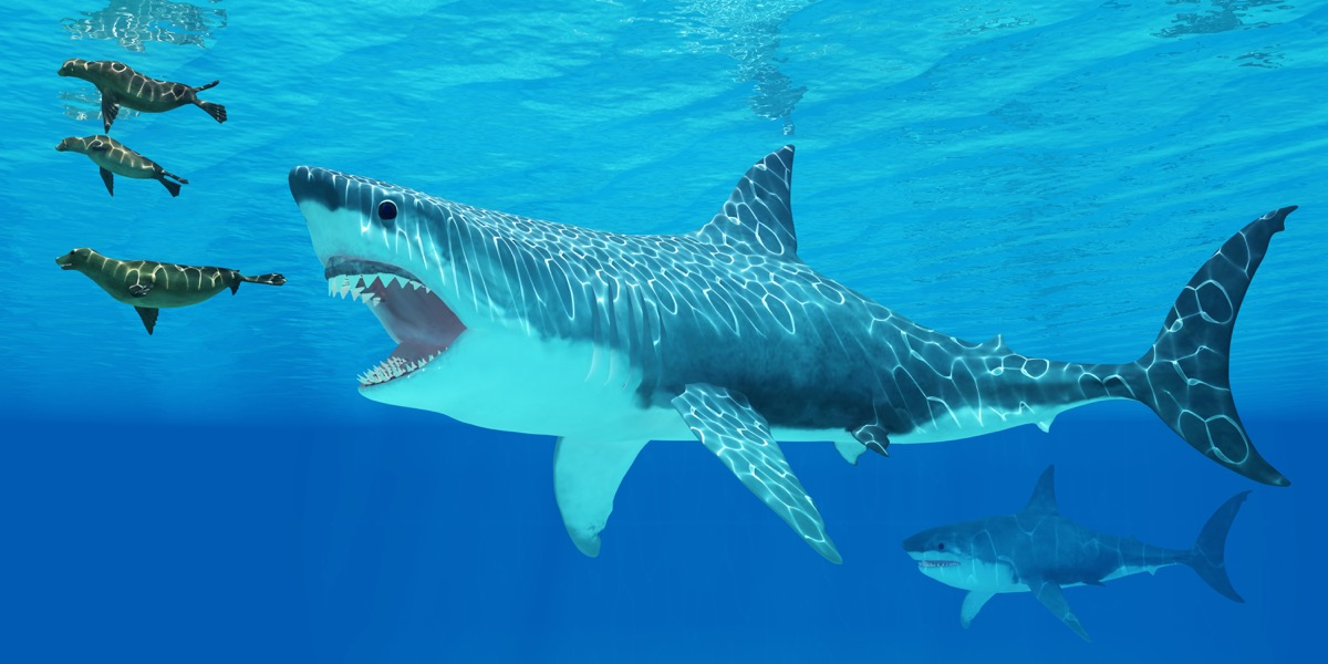 shark hunting seals