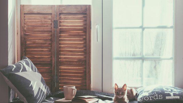cat cozy by window in house