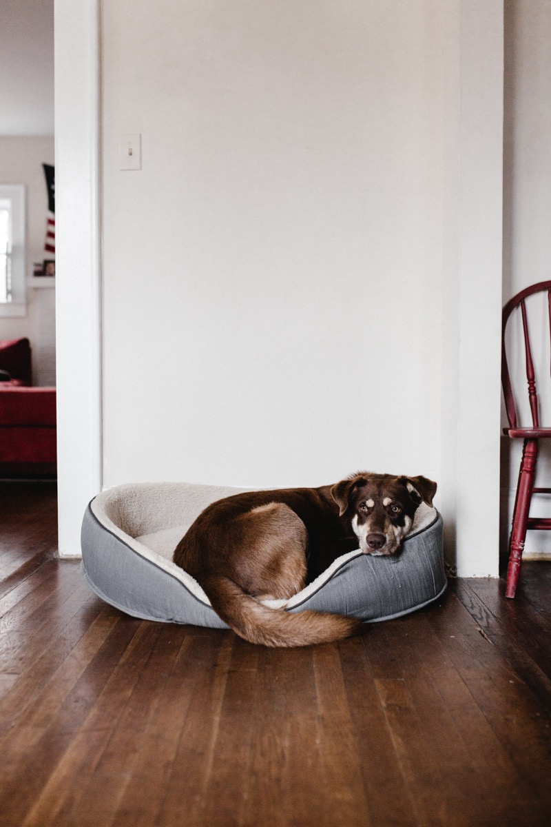 dog sleeping in dog bed things you never knew dogs could do