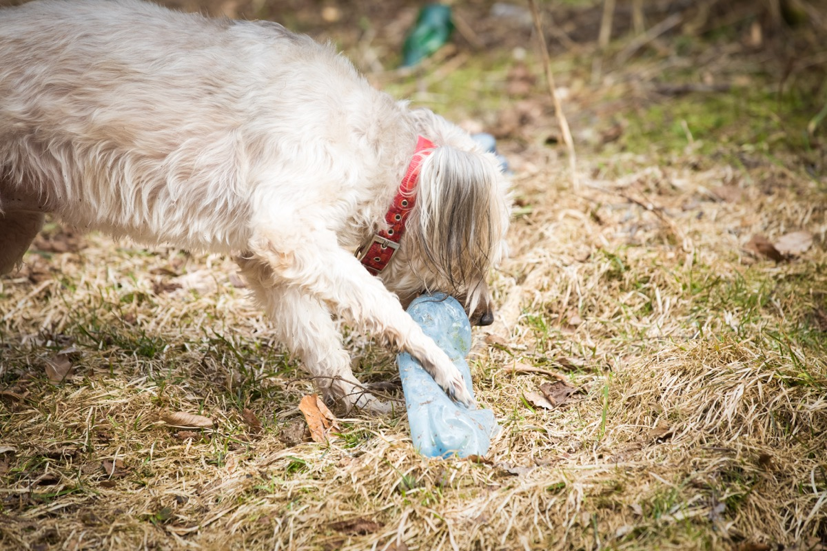 DIY Dog Toy Water Bottle Second Uses