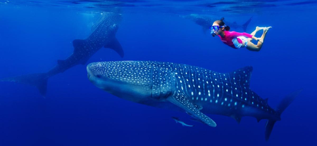 girl and whale shark snorkeler, shark photos