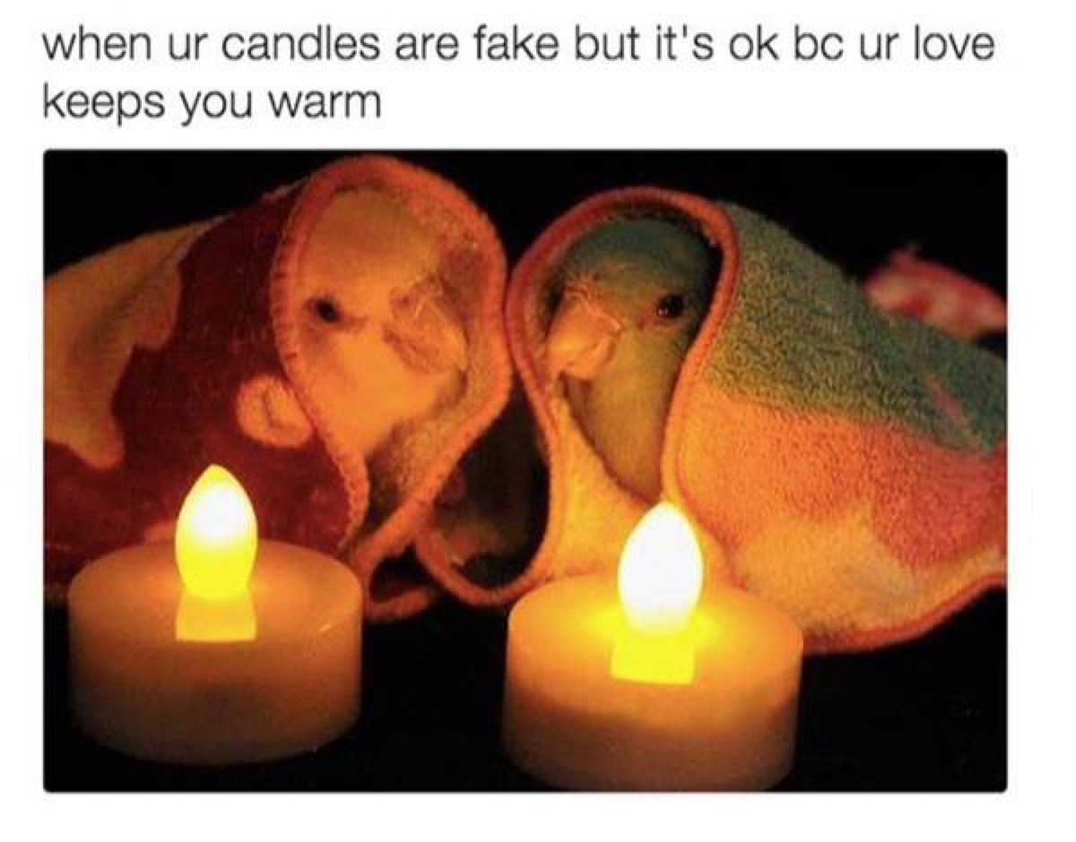 """Two lovebirds in tiny blankets with LED candles, caption reads: """"When ur candles are fake but it's ok bc ur love keeps you warm."""""""