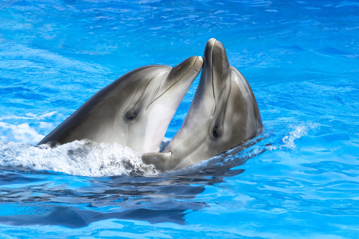 Two dolphins swimming together