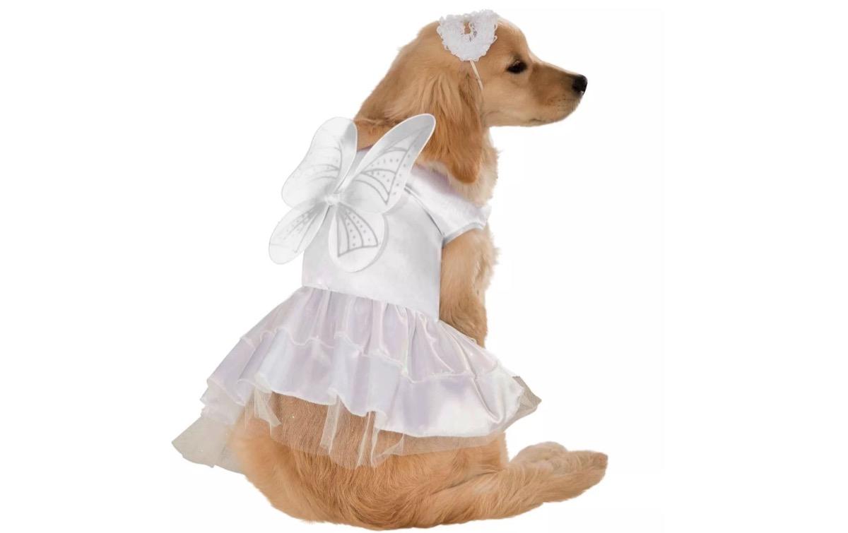dog angel costume, dog halloween costumes