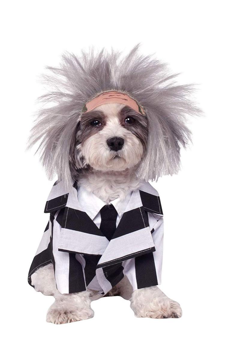 beetlejuice costume, dog halloween costumes