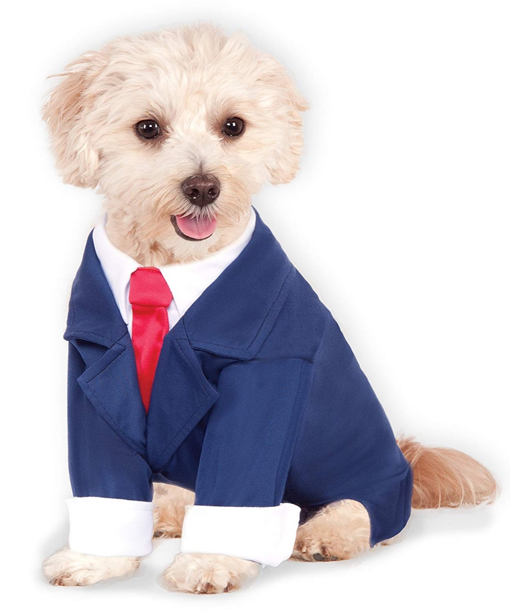 dog in business suit, dog halloween costumes