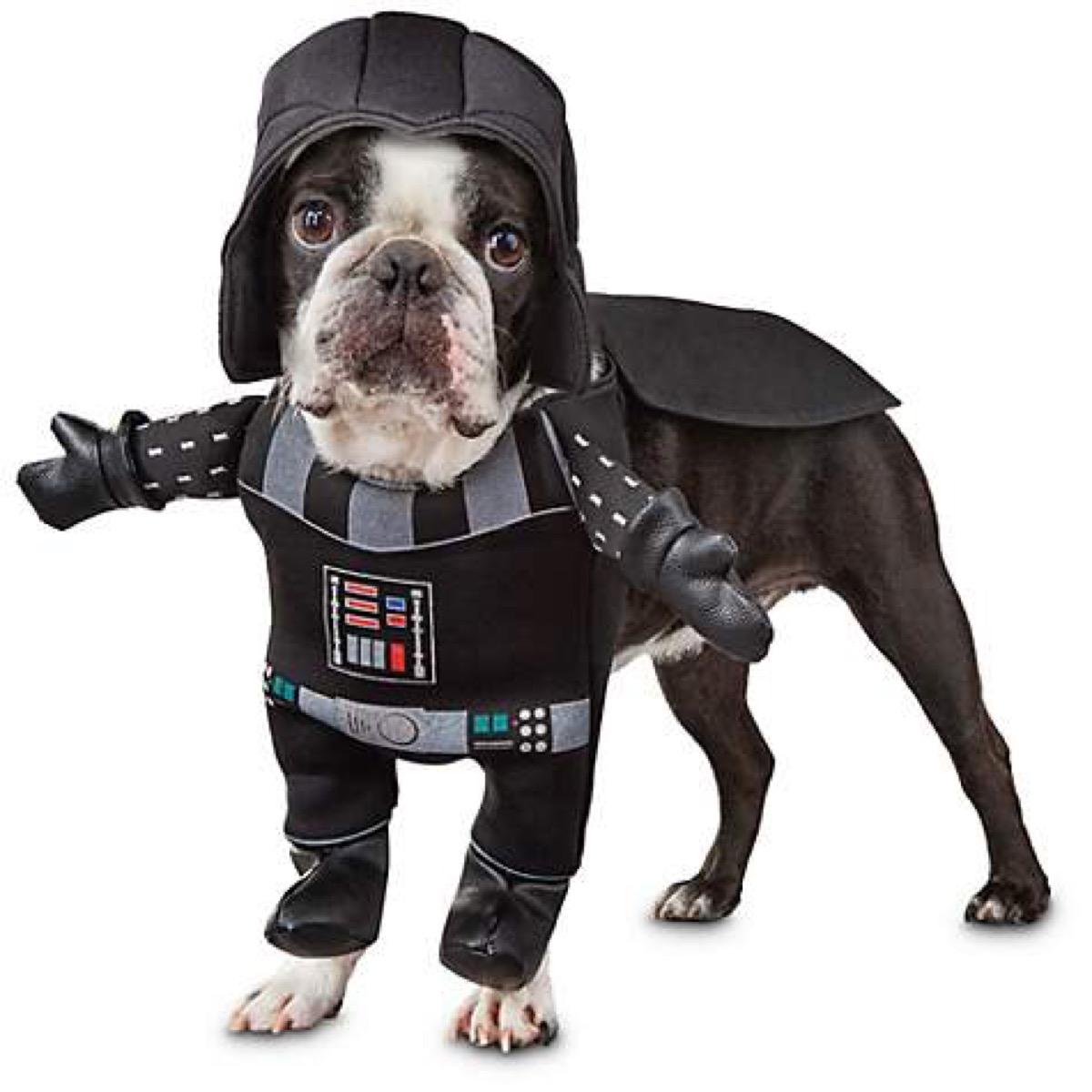 dog in darth vader costume, dog halloween costumes