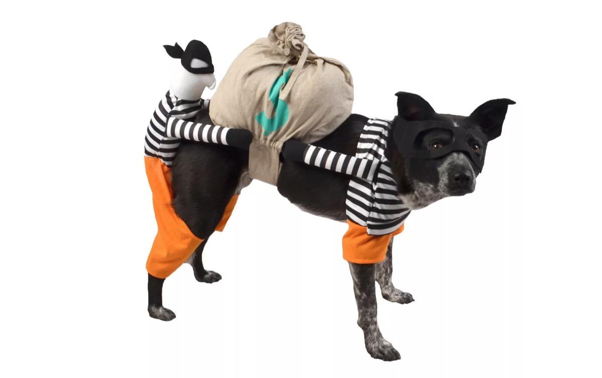 dog in burglar costume, dog halloween costumes