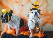 two dogs in halloween costumes, dog halloween costumes