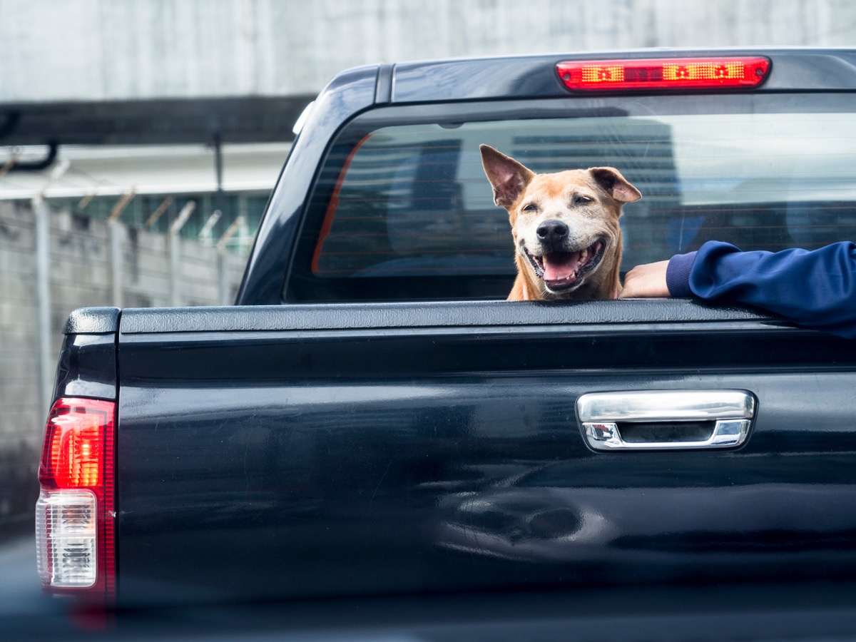 dog in a pickup truck