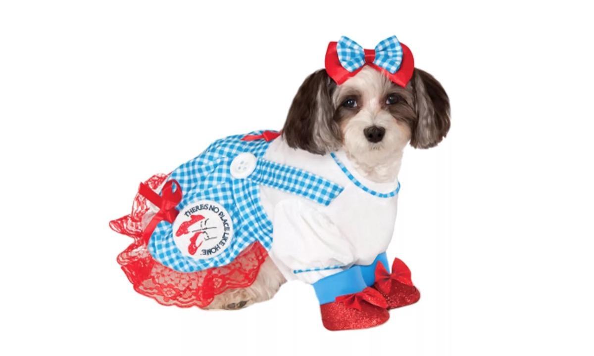 dog in dorothy costume, dog halloween costumes