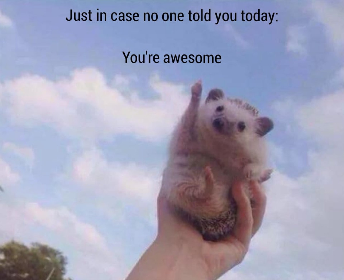 """Cute hedgehog picture with caption """"Just in case no one told you today: You're awesome."""""""