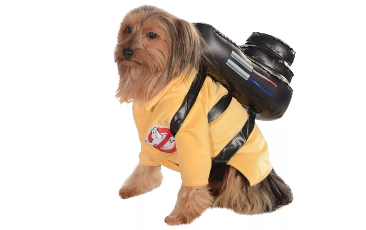 dog in ghostbusters costume, dog halloween costumes
