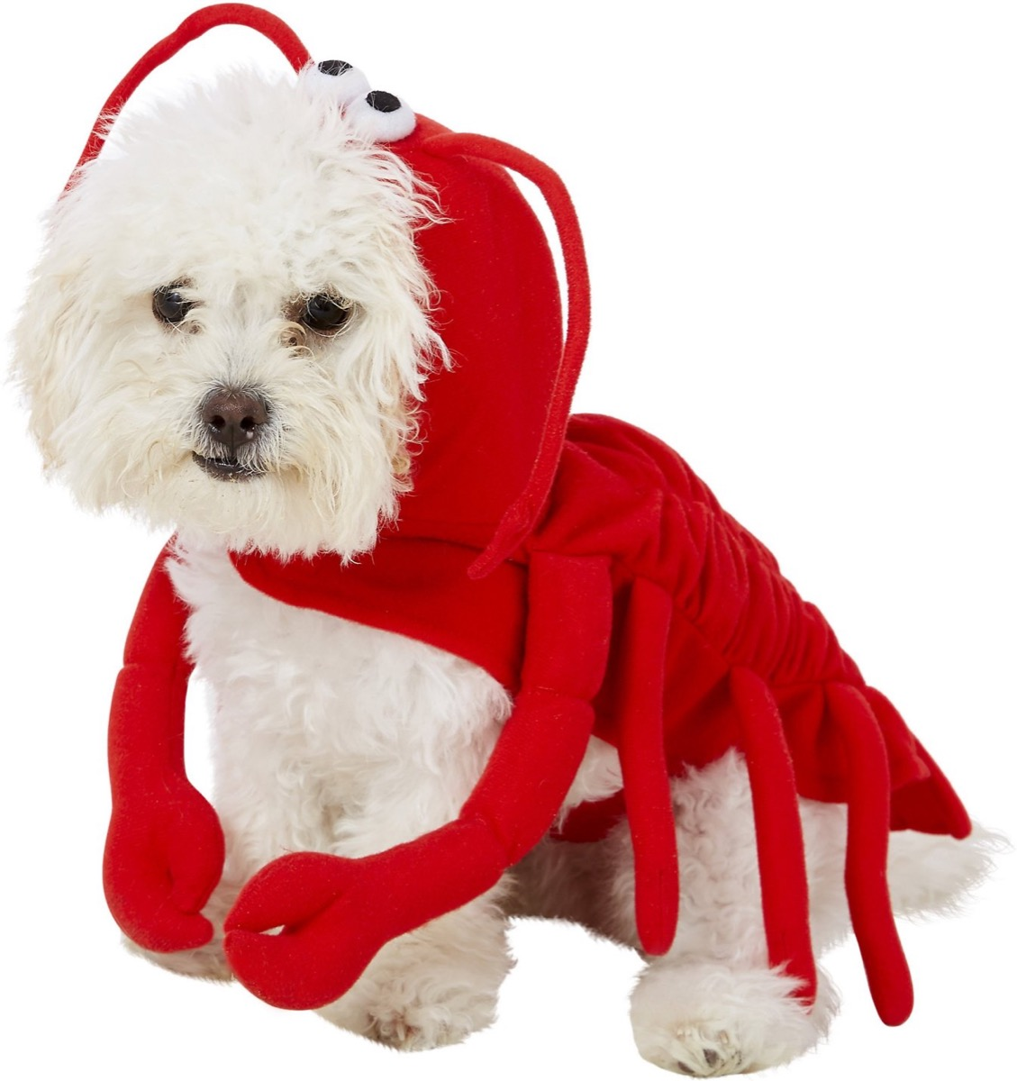 dog in lobster costume, dog halloween costumes