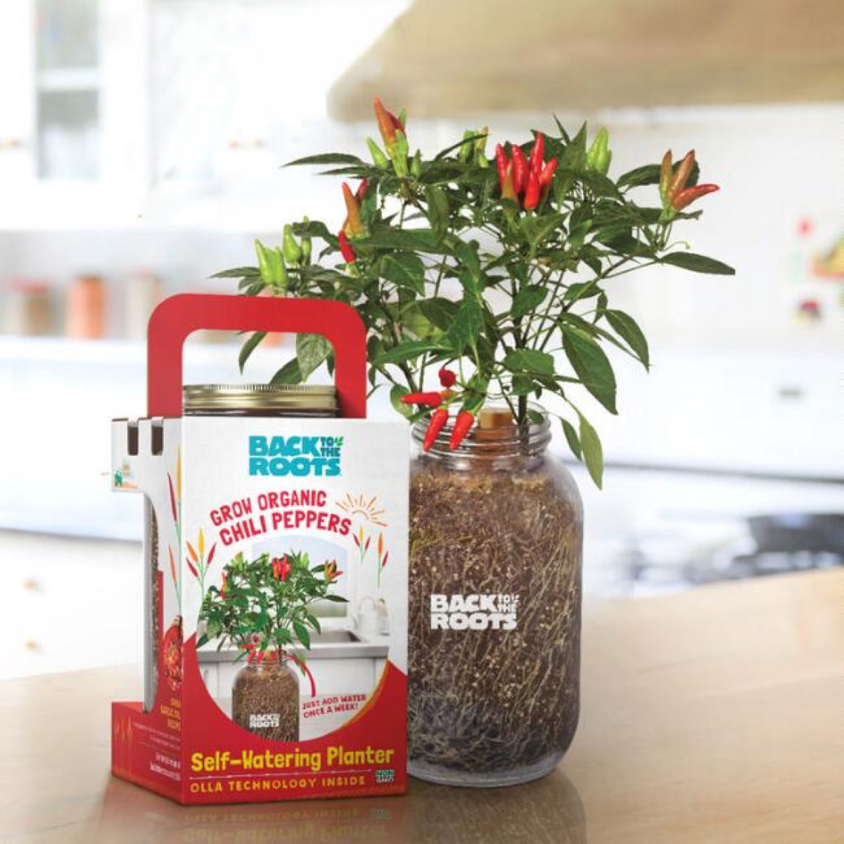 chili peppers growing in glass jar, best gifts for college students