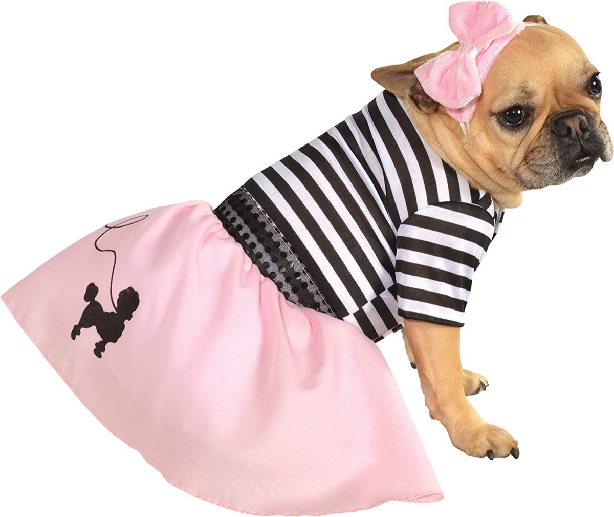 dog in striped shirt and pink skirt, dog halloween costumes