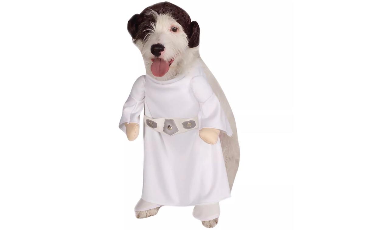 dog in princess leia costume, dog halloween costumes