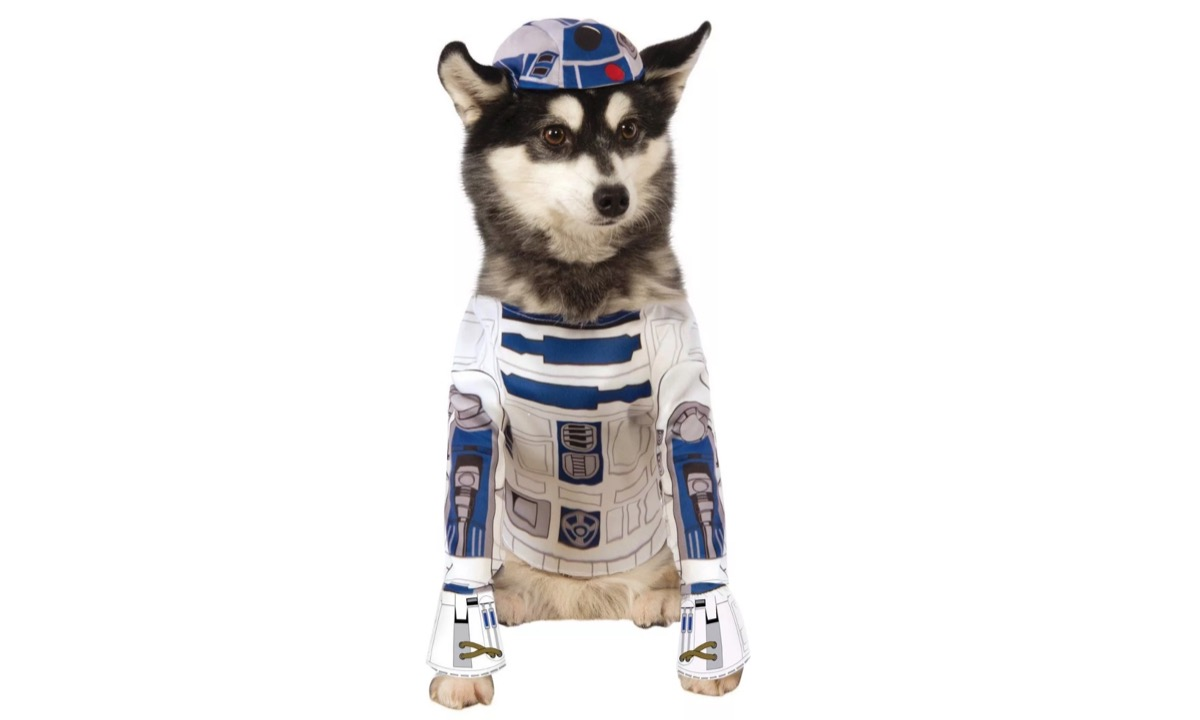 dog in r2d2 costume, dog halloween costumes