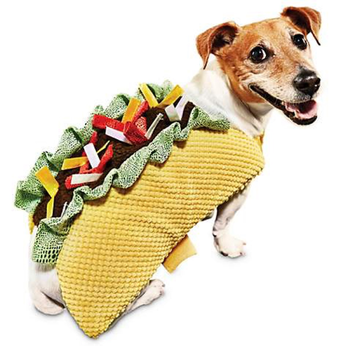 dog in taco costume, dog halloween costumes