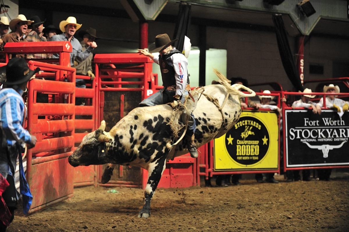 a texas cowboy at a rodeo