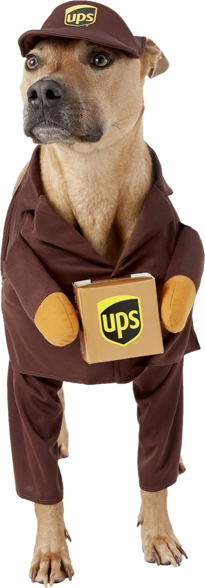 dog dressed as ups driver, dog halloween costumes