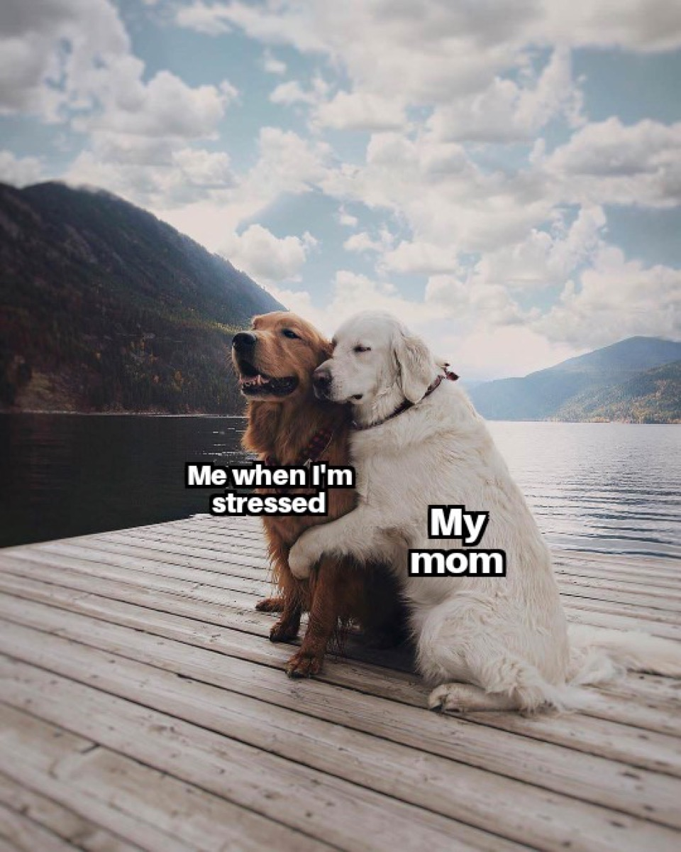 """Dog hugging another dog with the captions, """"Me when I'm stressed."""" and """"My mom."""""""