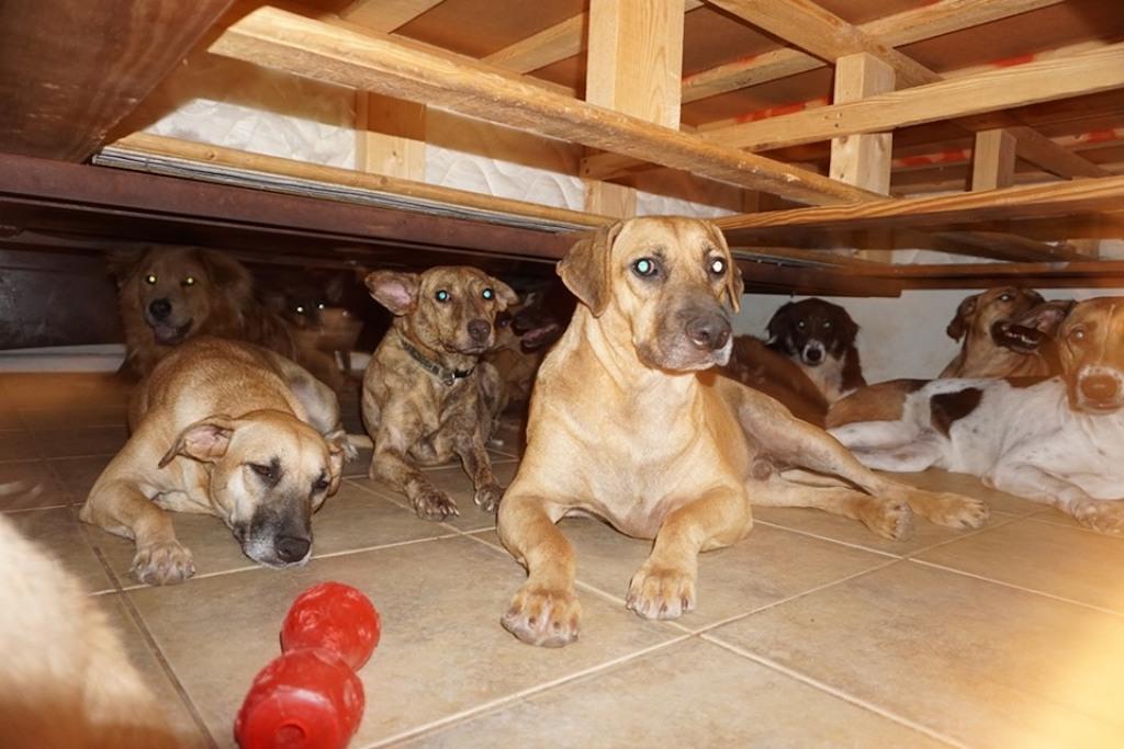 Chella Phillips bahamas dogs