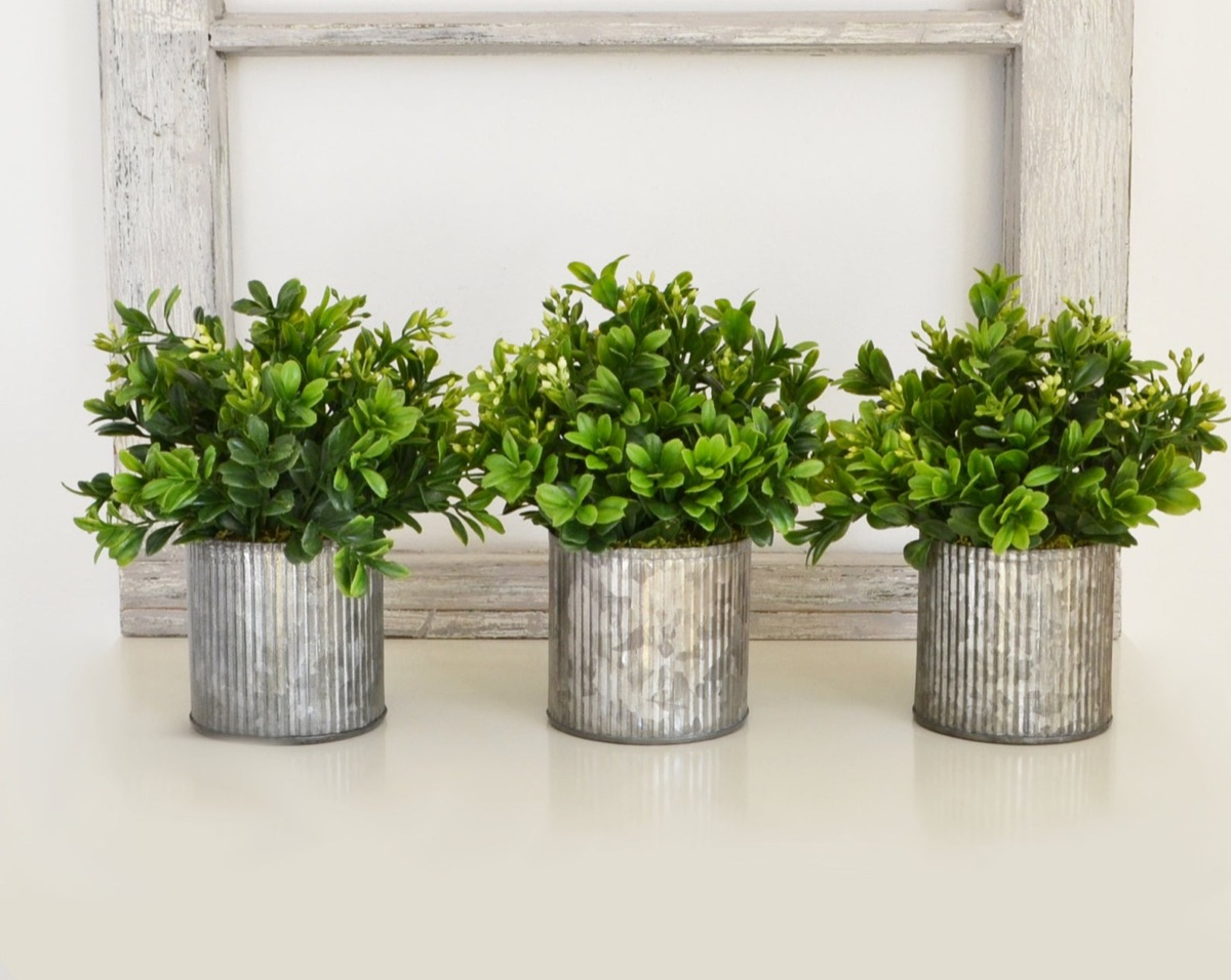three plants in silver pots, kitchen decorations