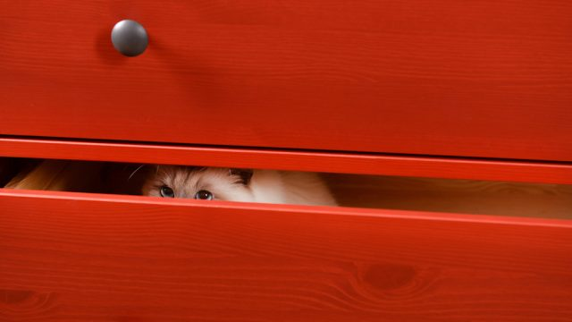 cat hides in drawer, why do cats like hiding