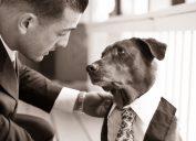 dog serves as best man at wedding