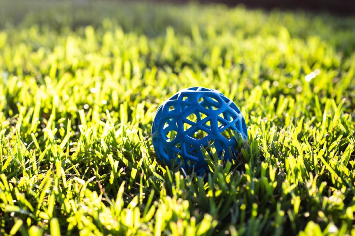 blue dog ball on grass