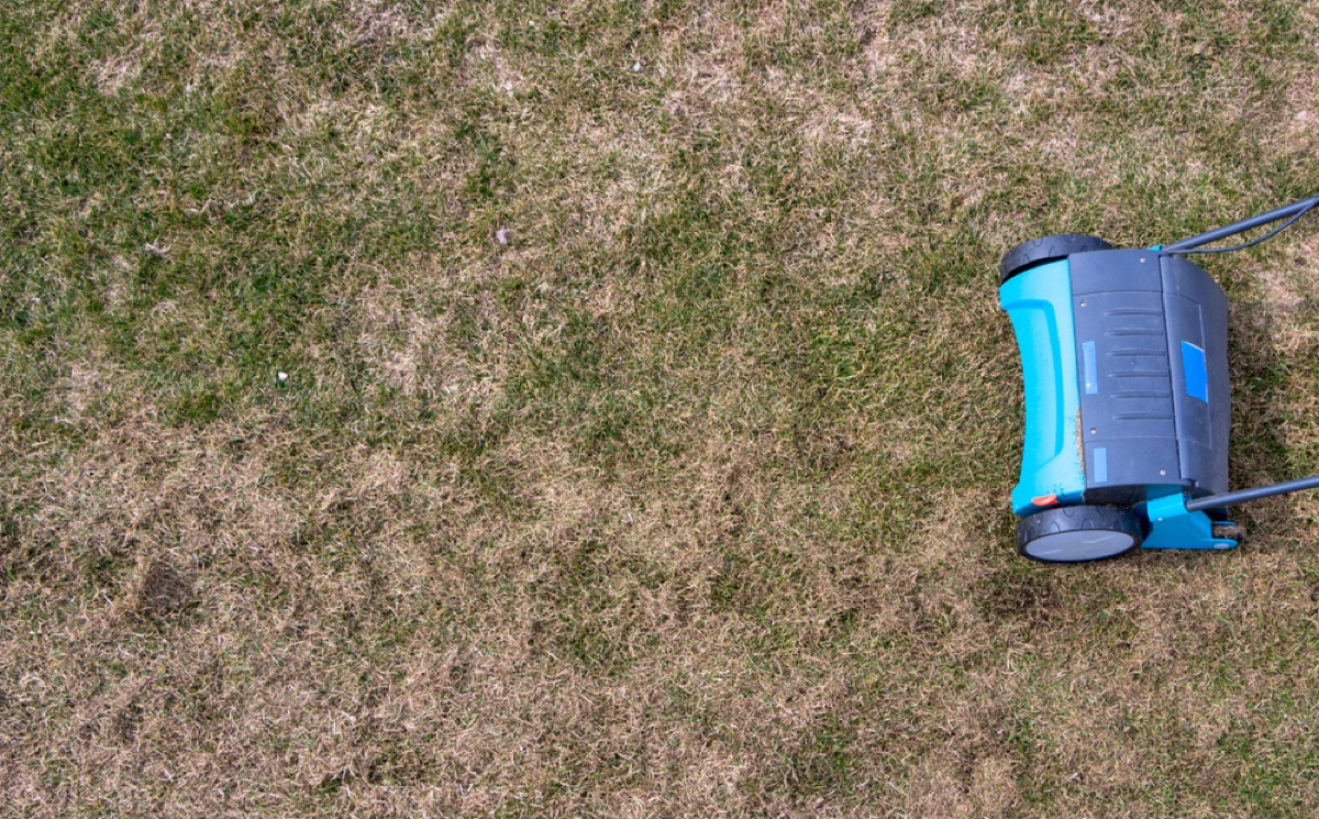 blue lawn aeration device on brown lawn