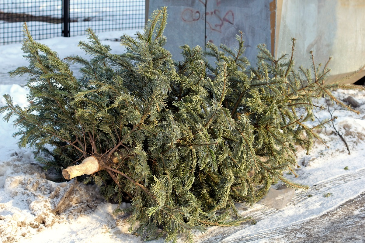 A discarded christmas tree sitting on the curb