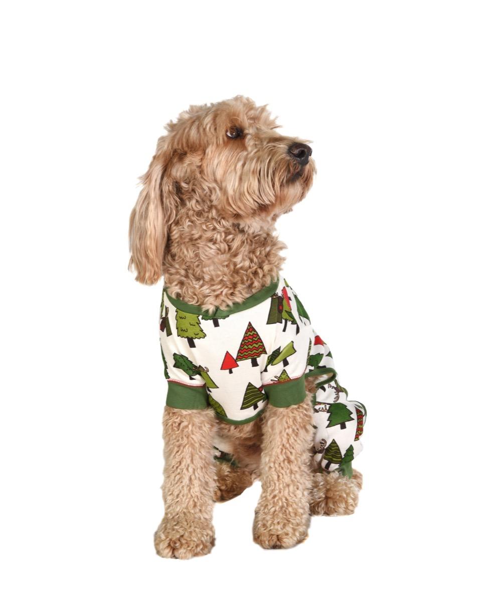 Dog wearing pajamas for Christmas
