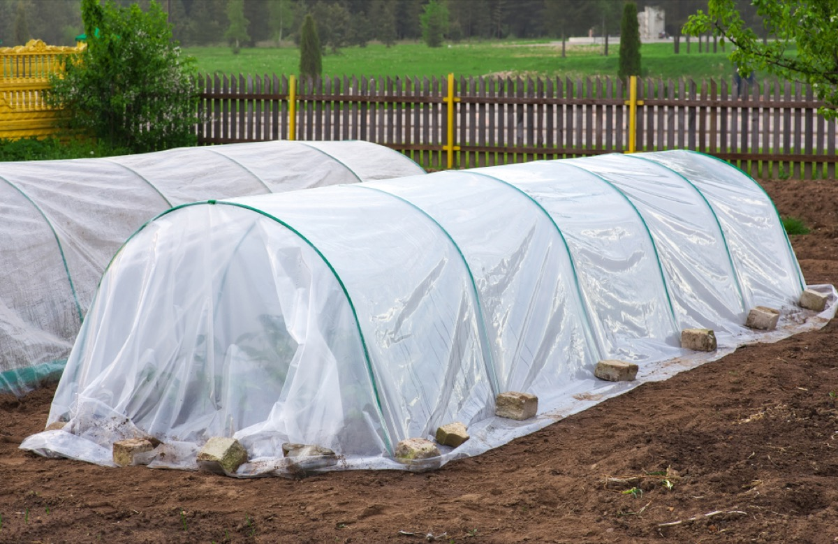 garden beds covered in rounded plastic hot bed