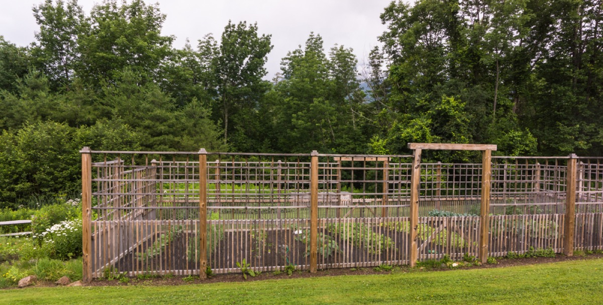 wooden fencing surrounding garden with evergreens in the background