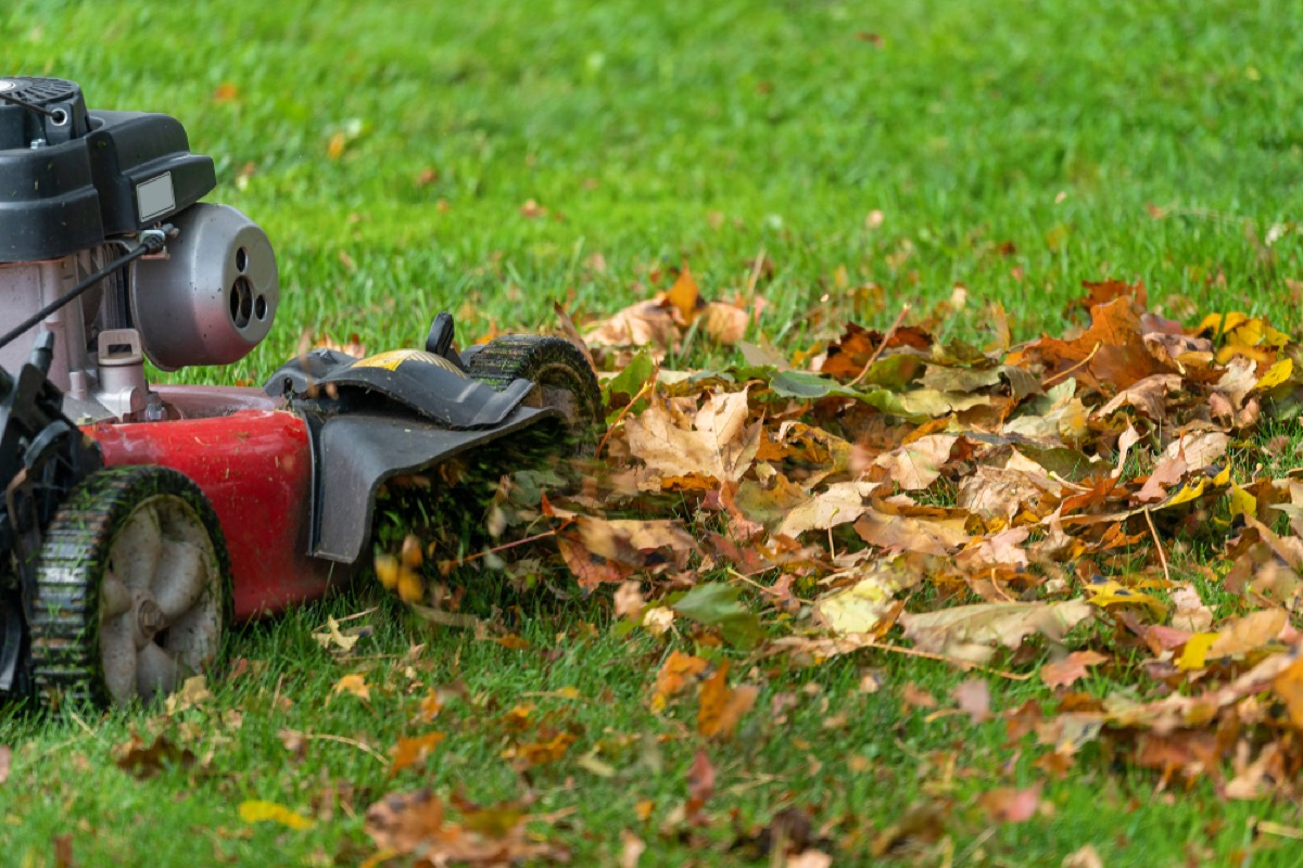 red lawnmower running over leaves and grass