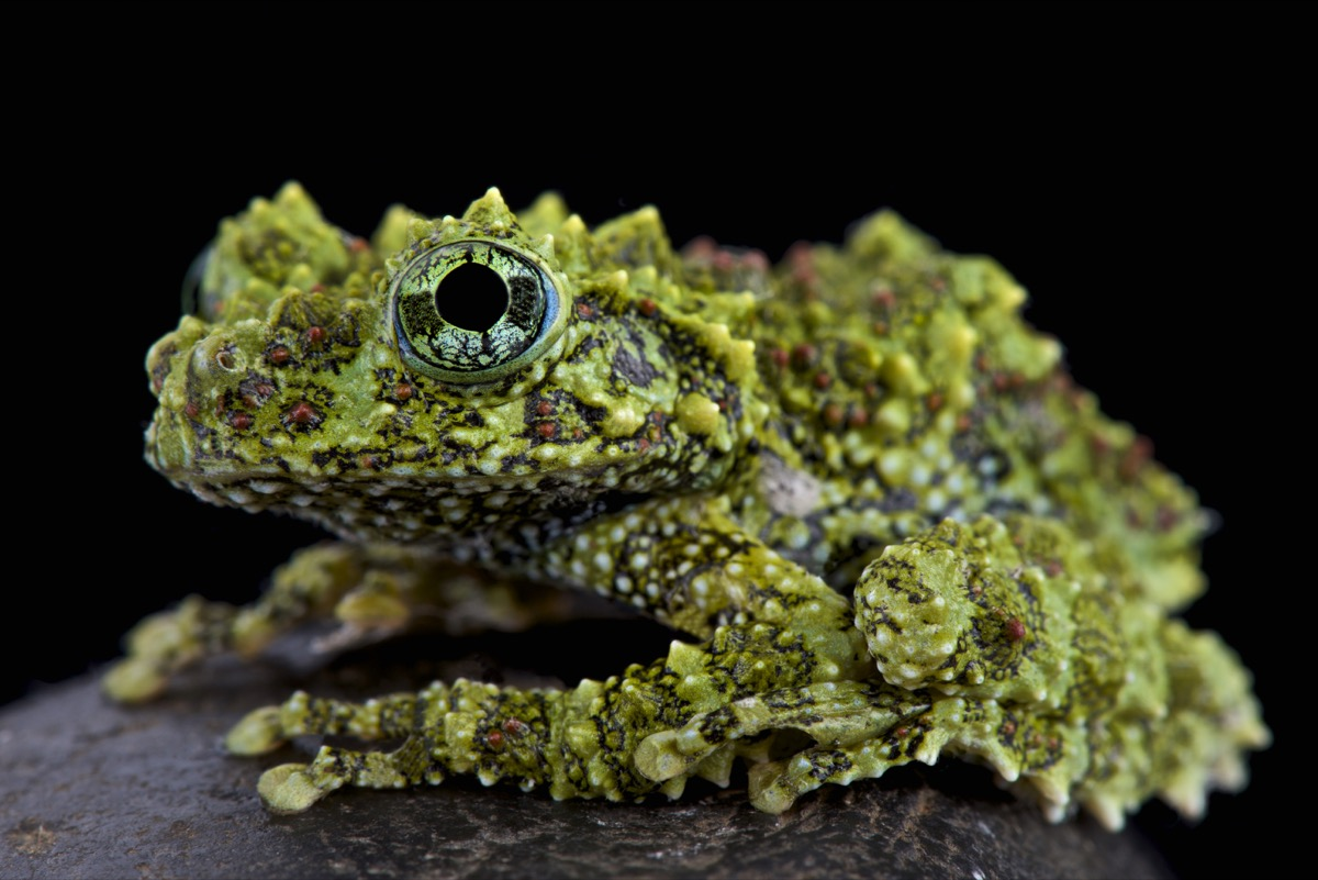 Frog that looks like it's covered in moss