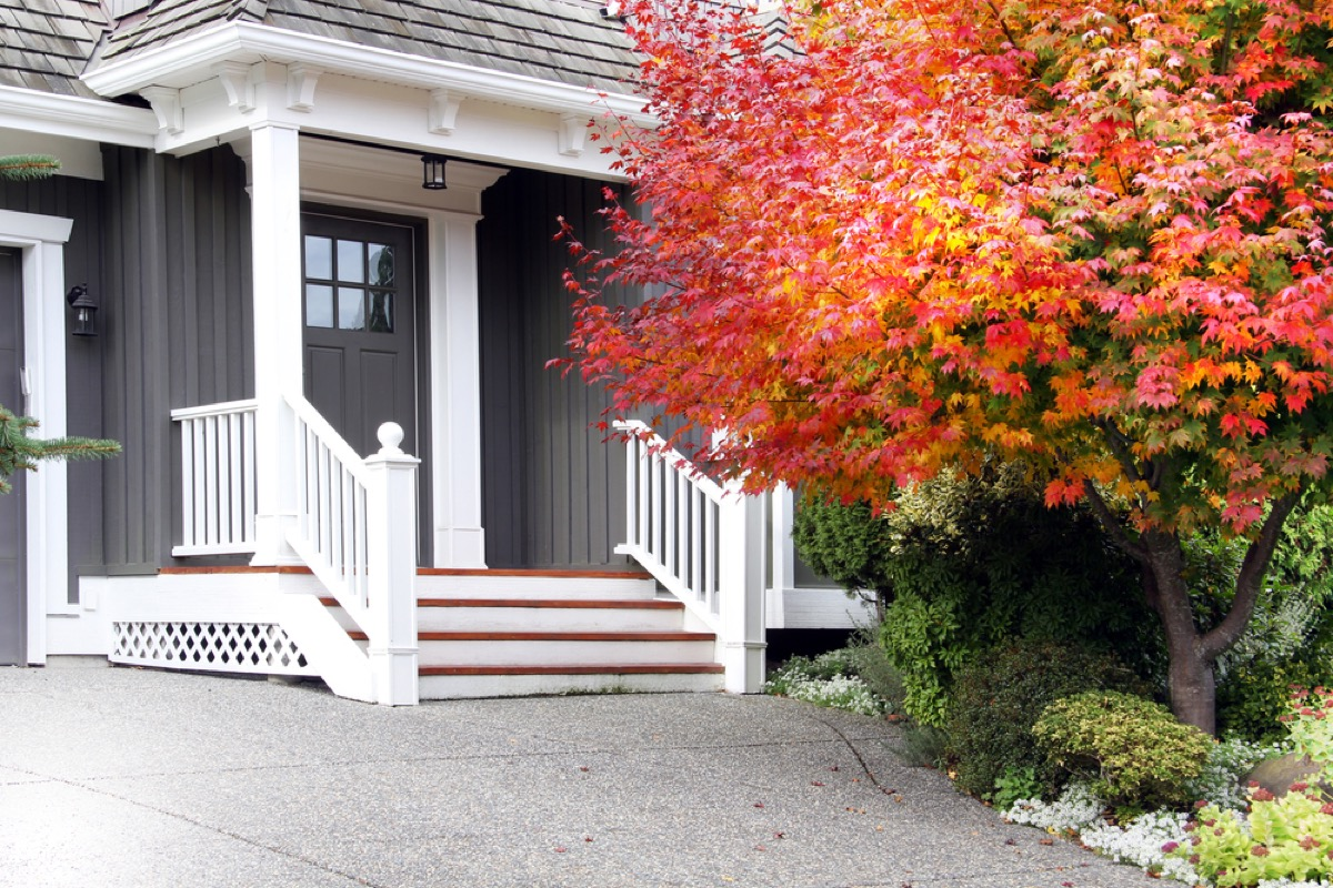 paving stones in front of gray house with red tree in front