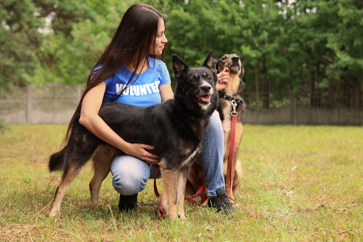 Female volunteer hanging out with dogs from the animal shelter