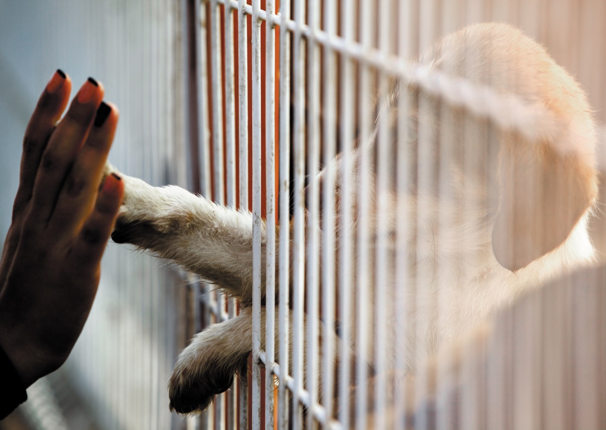 Woman reaching out to touch a dog's hand at the animal shelter