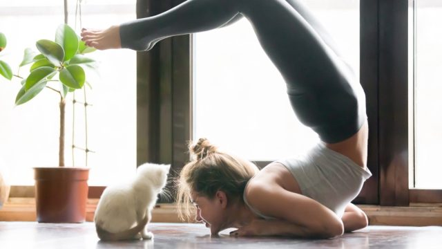 a woman doing a complex yoga pose next to a white kitten