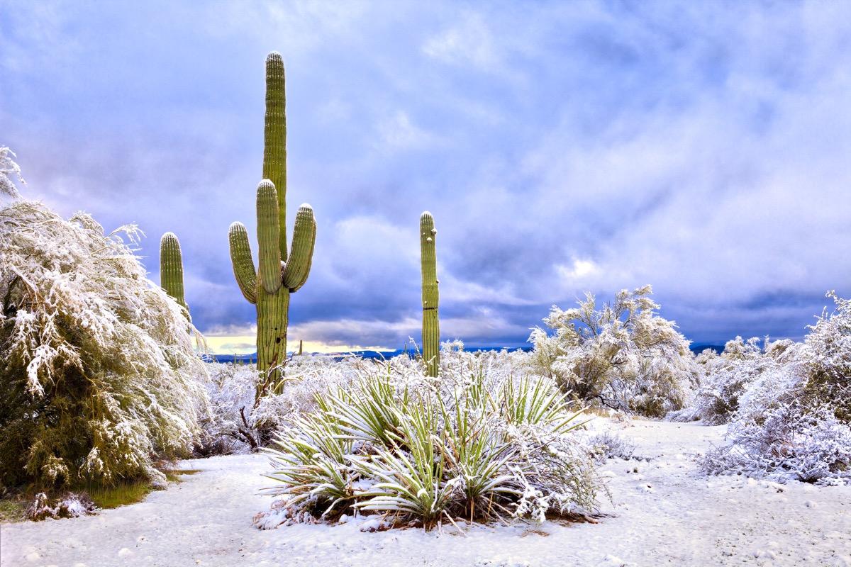 Arizona desert and cacti covered in snow