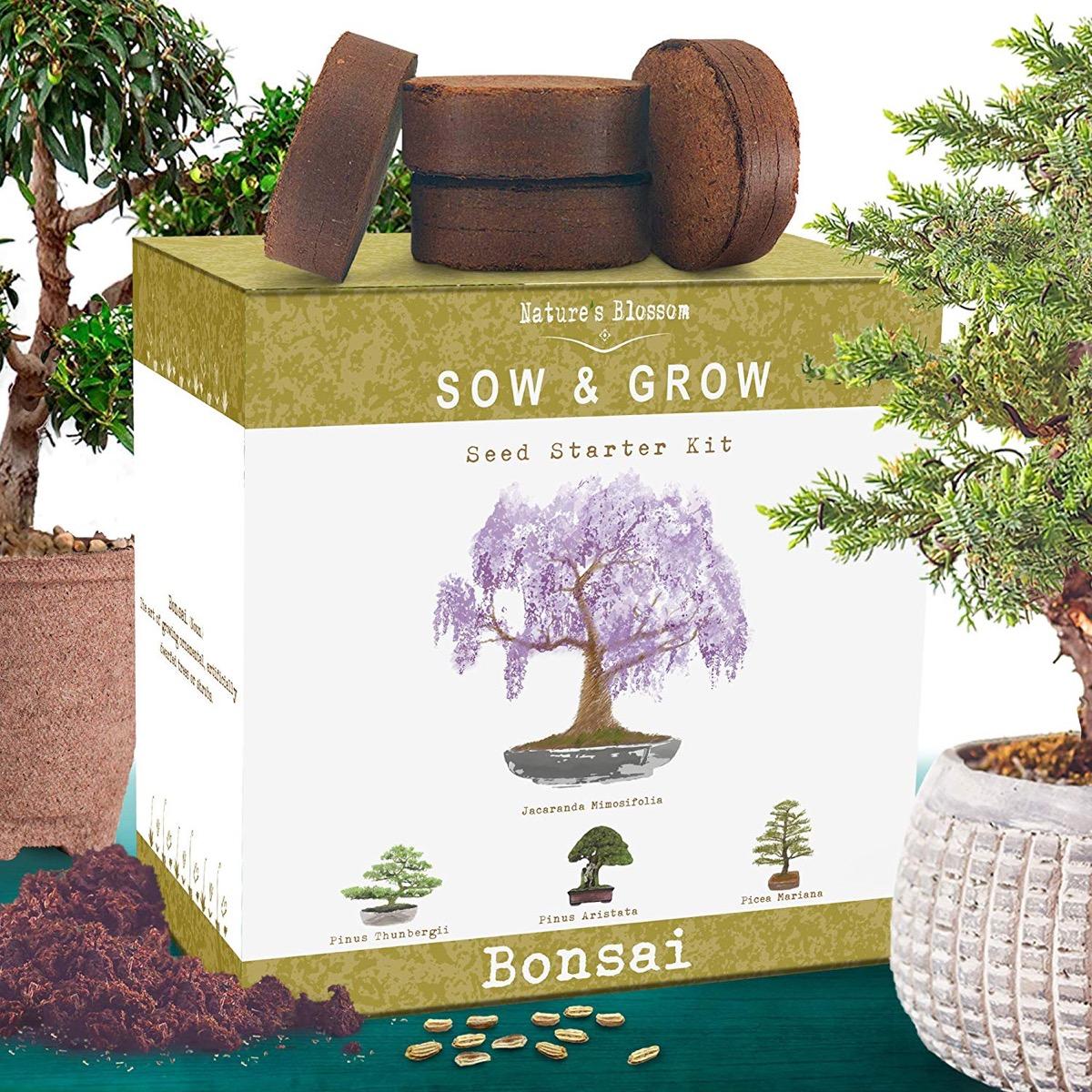 bonsai tree starter kit box with planting discs on top