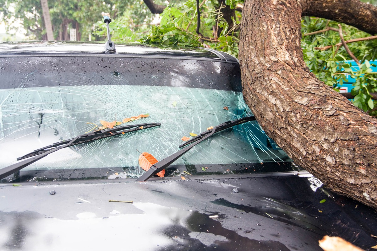 branch that has fallen on car
