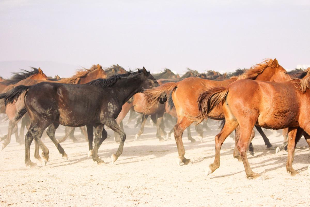 bunch of horses